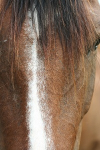 Ei kid photo - horse