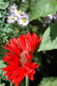 EI kid photo - red flower