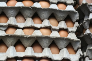 EI kid photo - Eggs