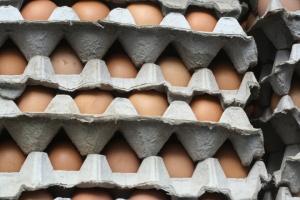 EI kid photo - Eggs