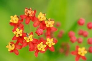 EI kid photo - flowers